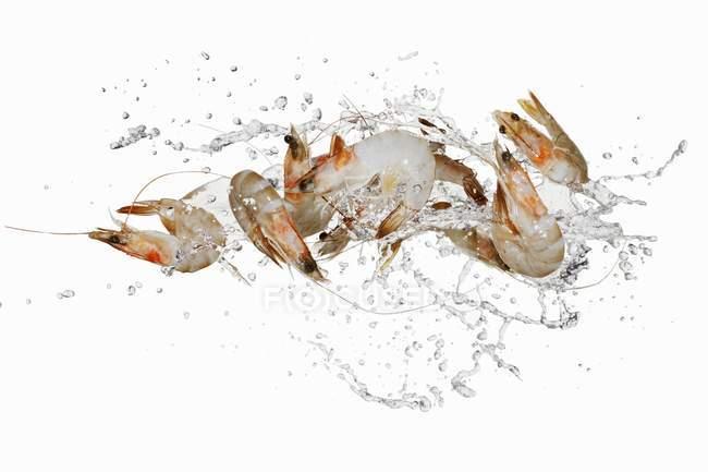 Crevettes fraîches en splash d'eau — Photo de stock