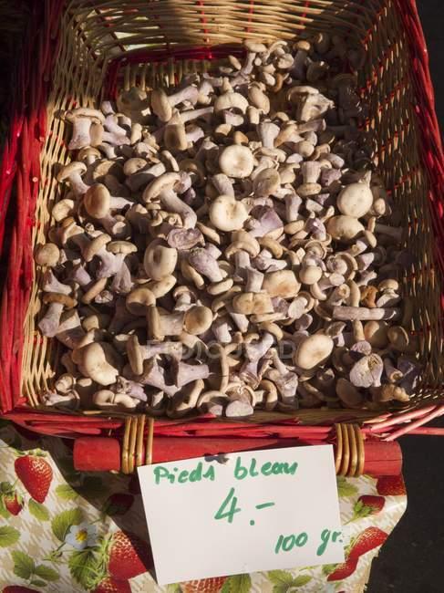 Erhöhten Blick auf rot Weidenkorb Bluefoot Pilze mit Preisschild — Stockfoto