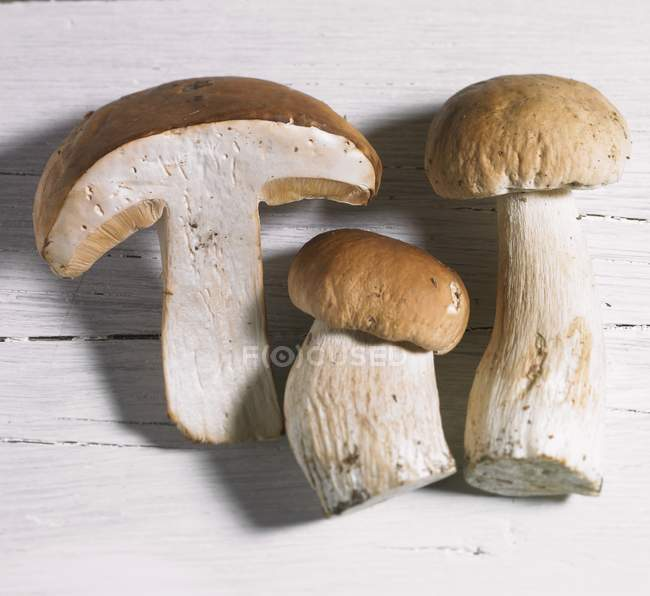Three fresh porcini mushrooms — Stock Photo