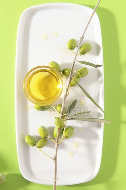Оливковое масло и филиал — стоковое фото