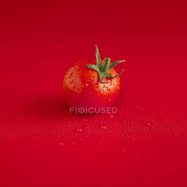 Красный мокрый помидор — стоковое фото