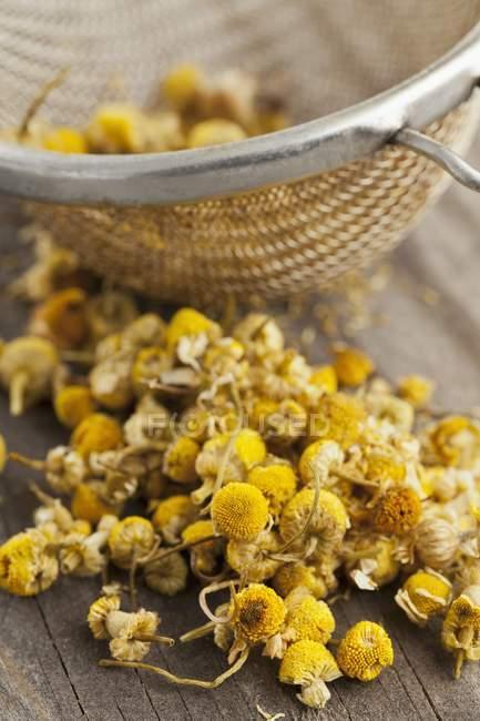 Flores de manzanilla en un colador de té - foto de stock