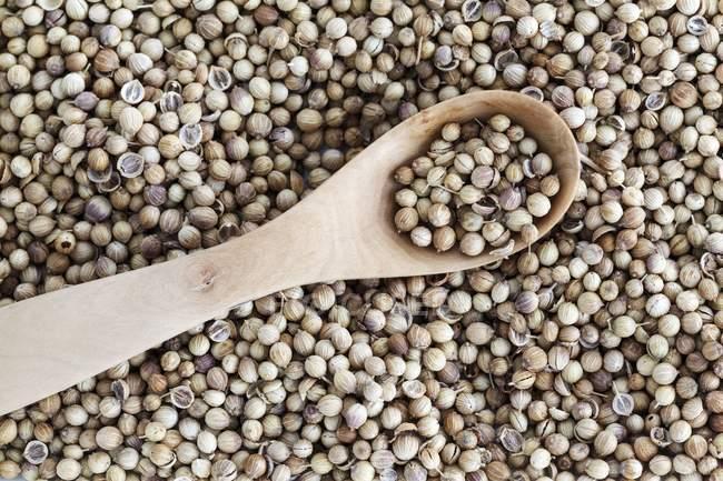 Коріандр насіння і дерев'яною ложкою — стокове фото