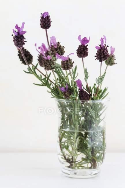 Крупным планом вид цветущих лаванды в вазе — стоковое фото