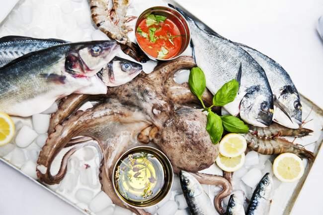 Frischer Fisch mit Kraken und Garnelen — Stockfoto