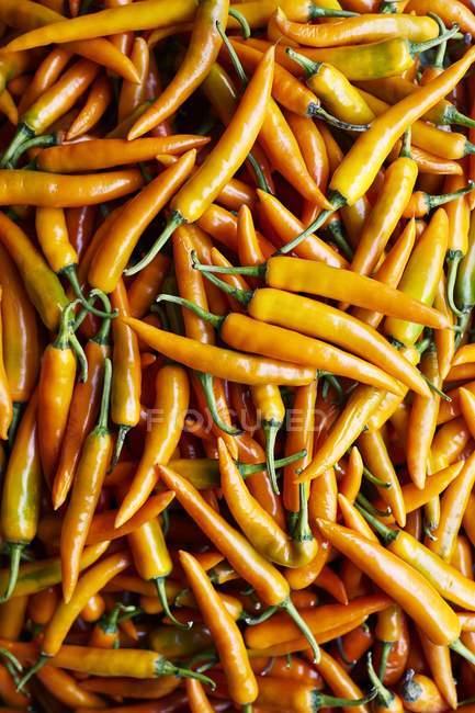 Piment jaune — Photo de stock