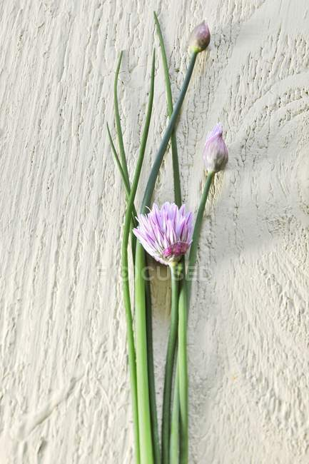 Closeup view of Chive flowers and green stems on wooden surface — Stock Photo