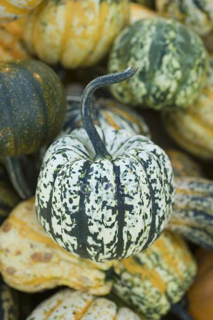 Assorted ornamental gourds on blurred background — Stock Photo