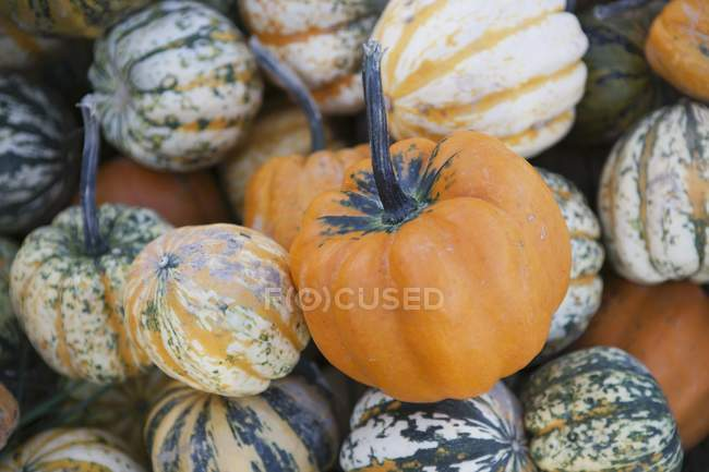 Heap of assorted ornamental gourds, full frame — Stock Photo