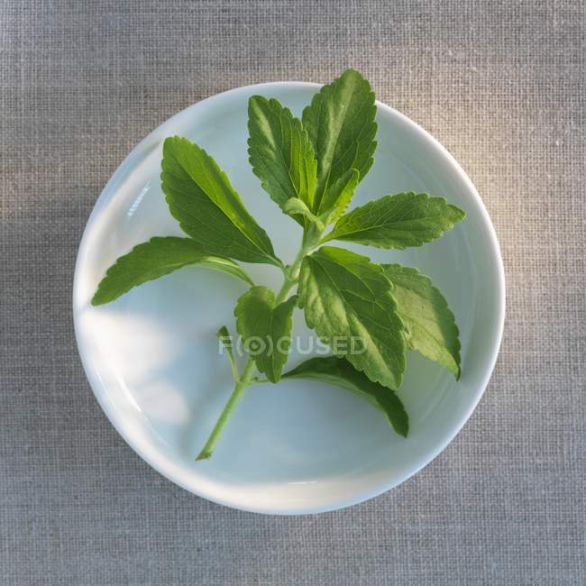 Closeup top view of a fresh Stevia sprig on a plate — Stock Photo