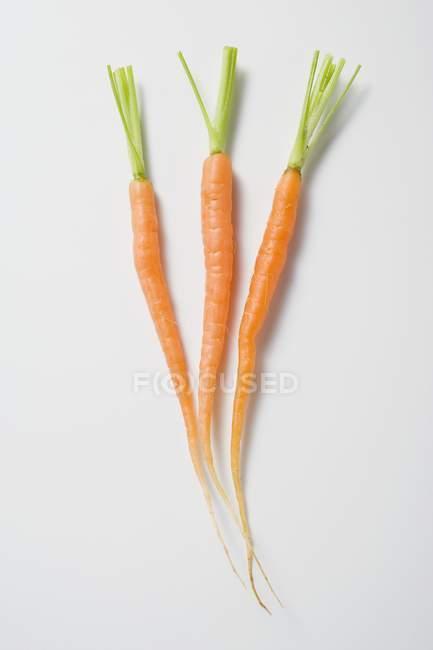 Zanahorias jóvenes con tallos - foto de stock