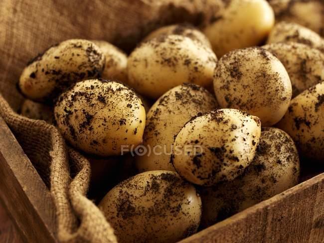 Kiste mit frisch gepflückten Kartoffeln — Stockfoto