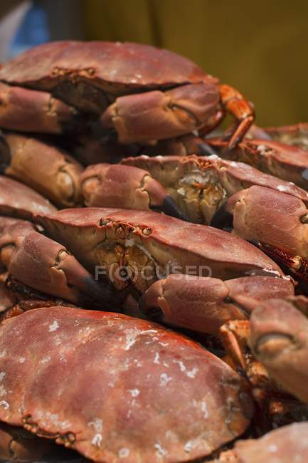 Closeup view of cooked crabs heap — Stock Photo