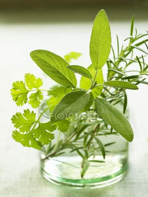 Salvia con perejil y romero - foto de stock