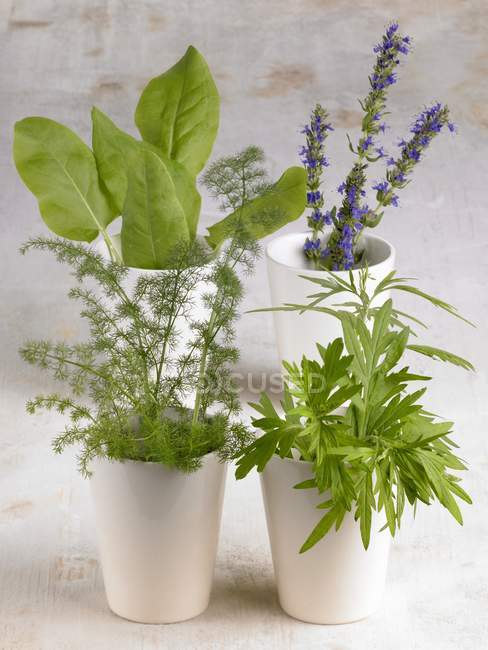 Closeup view of assorted herbs in beakers — Stock Photo