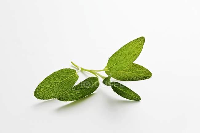Свежий росток зелени — стоковое фото