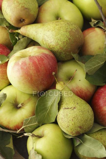 Fresh picked pears and apples — Stock Photo