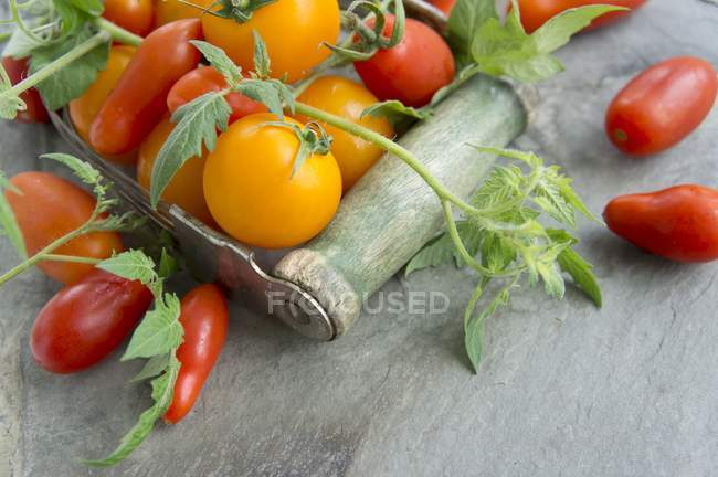 Various tomatoes with leaves — Stock Photo