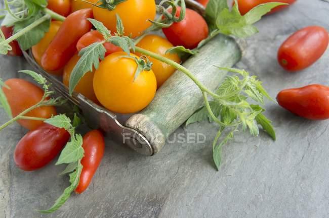 Verschiedene Tomaten mit Blättern — Stockfoto