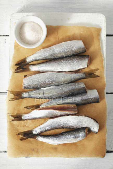 Fresh herrings on parchment paper — Stock Photo