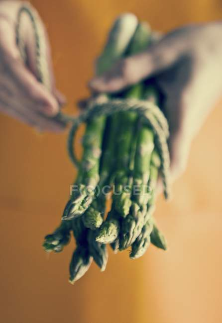 Hands holding bunch of asparagus — Stock Photo