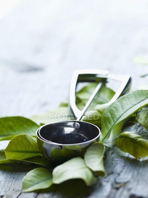 Ice cream scoop on lemon leaves — Stock Photo