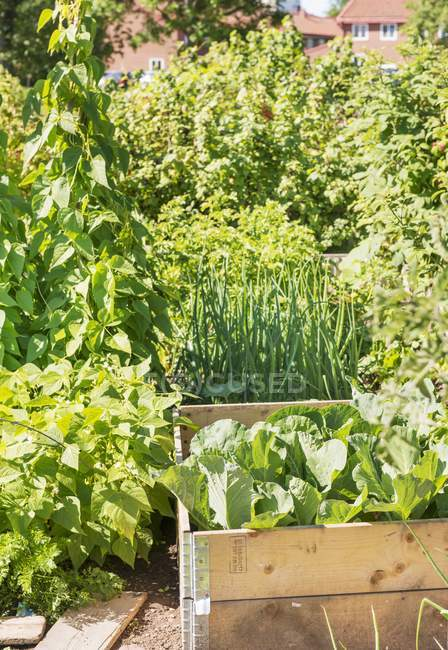 A garden where various vegetables and plants are growing outdoors — Stock Photo