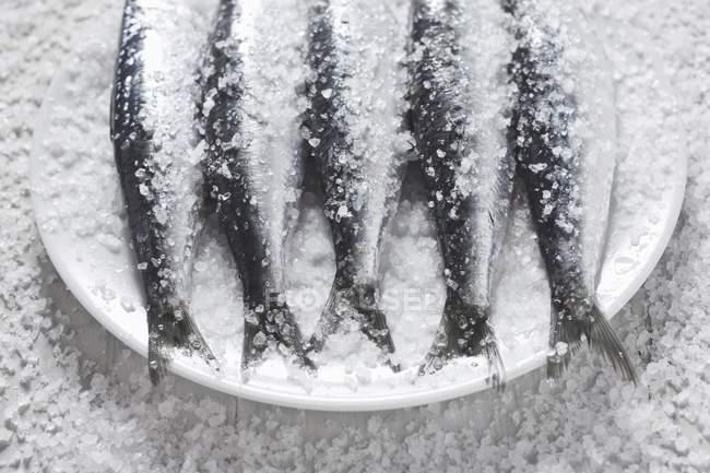 Сырые сардины в соли — стоковое фото