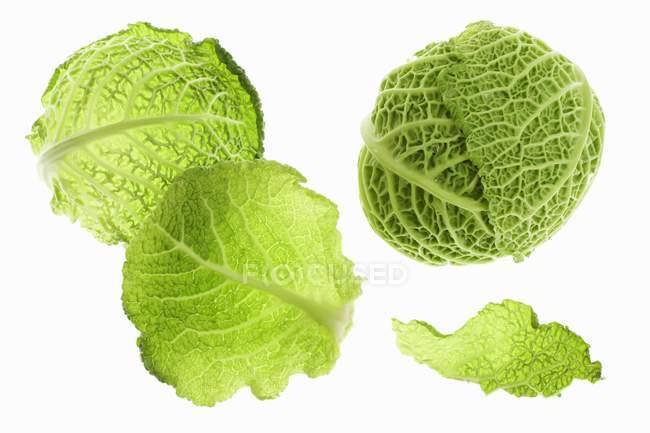 Капуста свежая Savoy с листьями — стоковое фото