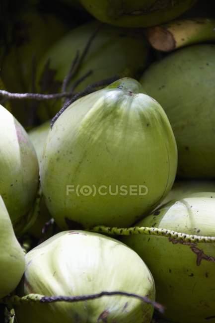 Selezionati freschi verde noci di cocco — Foto stock