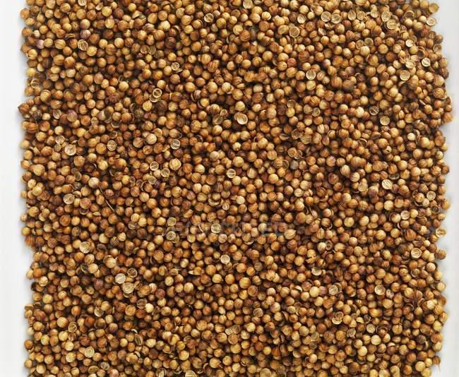 Quadrado de sementes de coentro — Fotografia de Stock