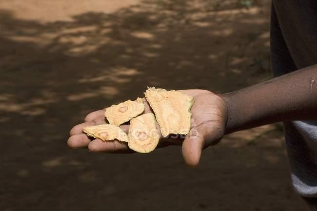 Обрезанное повышенных вид руки, держащей свежие коры корицы — стоковое фото