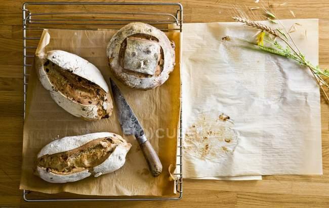 Panes recién horneados de pan - foto de stock