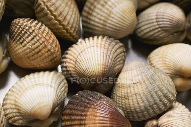 Gros plan vue du dessus des coques coquillages — Photo de stock