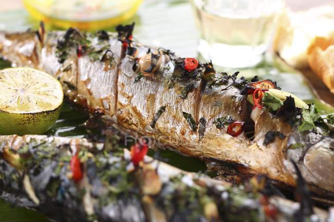 Grilled mackerel with herbs — Stock Photo