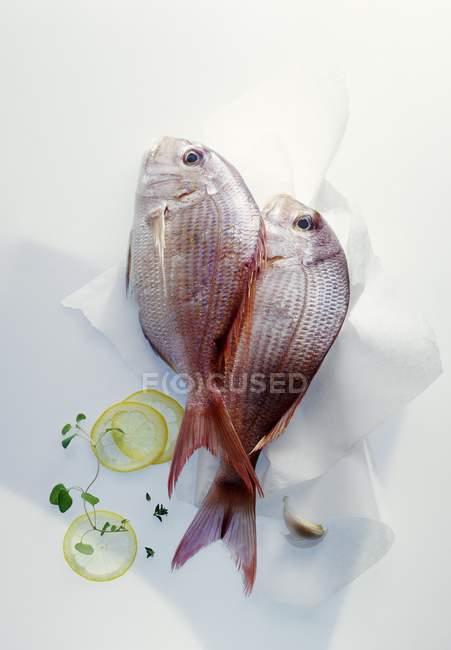 Raw sea bream fish on paper — Stock Photo
