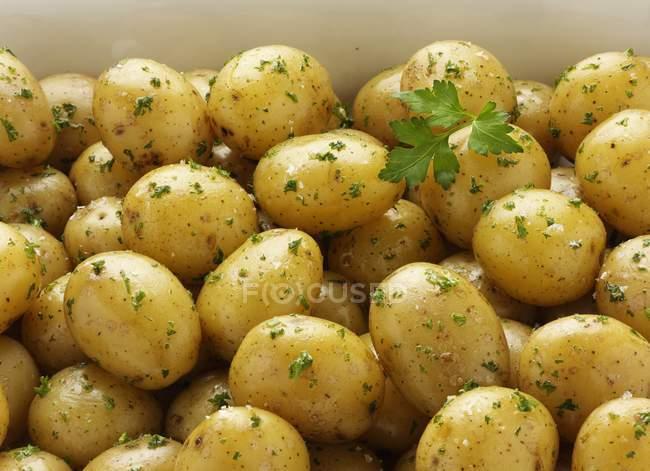 Bratkartoffeln mit Petersilie — Stockfoto