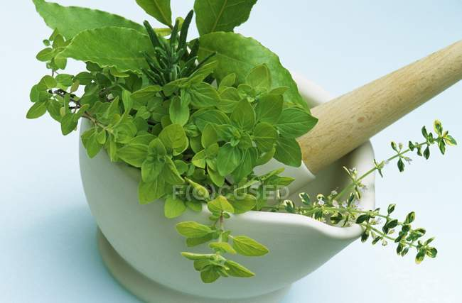 Freshly picked culinary herbs — Stock Photo