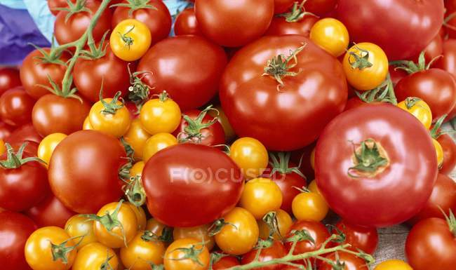 Various varieties of tomatoes — Stock Photo