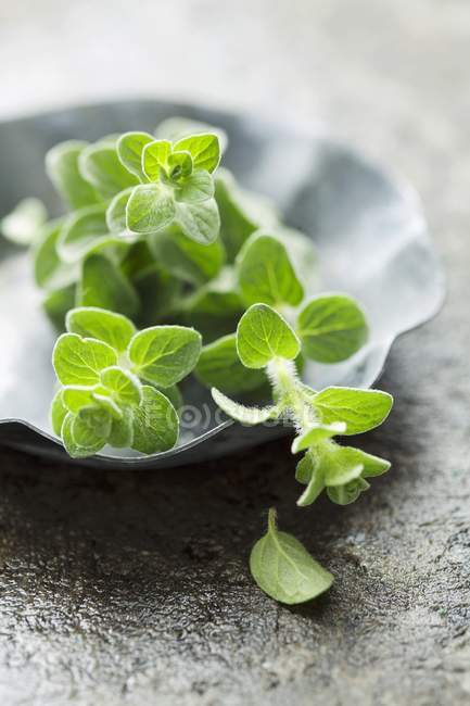 Raminhos de manjerona fresca — Fotografia de Stock