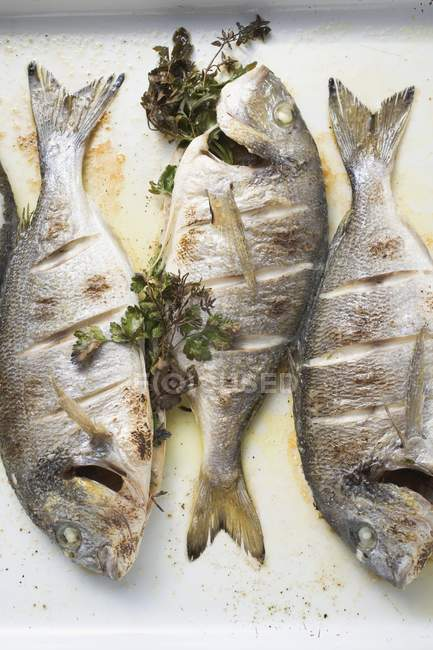 Roasted sea bream with parsley — Stock Photo