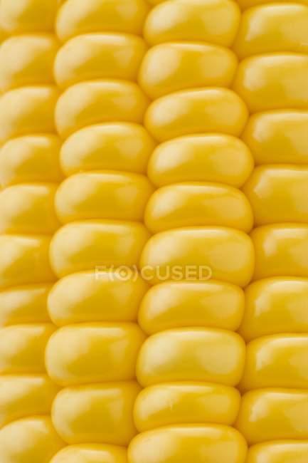 Спелой кукурузы в початках — стоковое фото