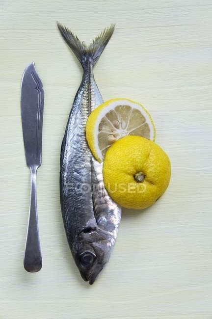 Pescado crudo con las rebanadas de yuzu - foto de stock
