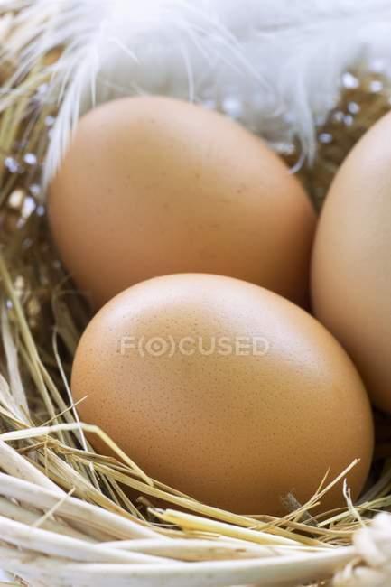 Ovos castanhos no ninho — Fotografia de Stock