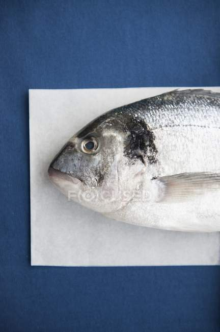 Fresh porgy fish on paper — Stock Photo