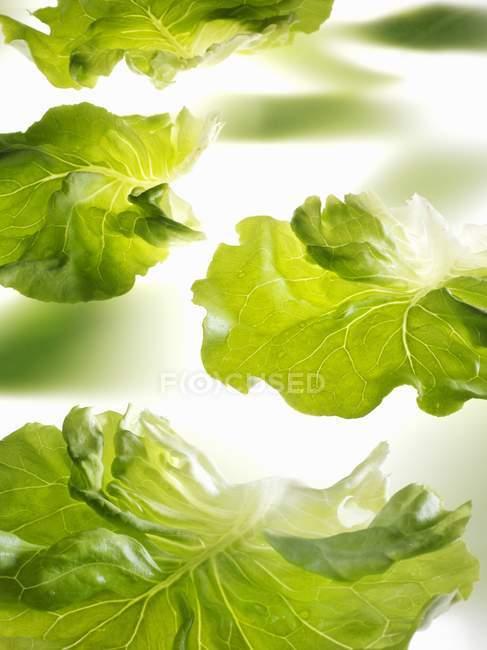 Folhas de alface fresca — Fotografia de Stock