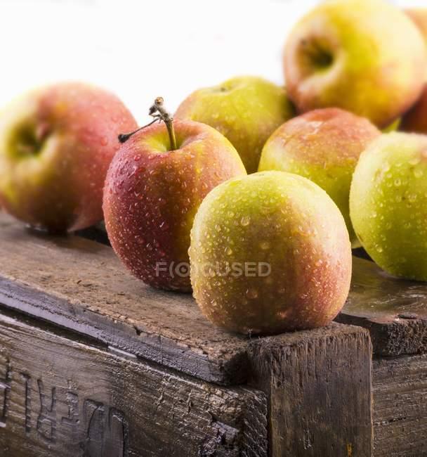 Freshly washed apples — Stock Photo