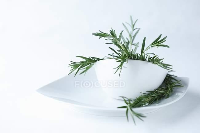 Ramita de romero fresco - foto de stock