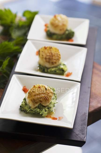 Closeup view of scallops on mashed stinging nettles and potatoes — Stock Photo