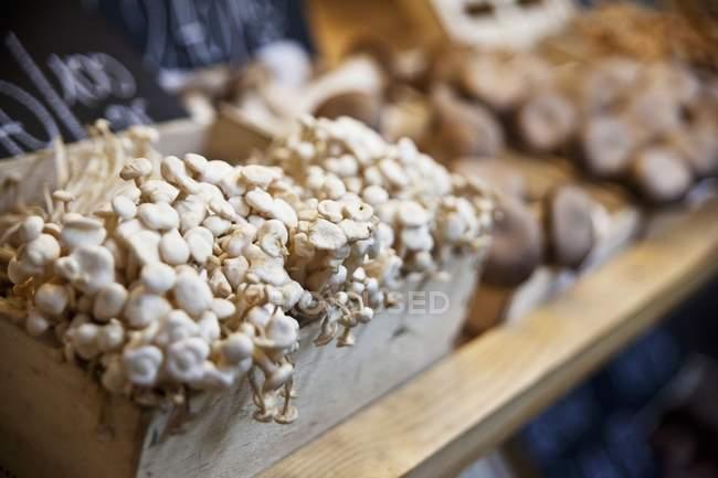 Ящик с грибами шимэдзи — стоковое фото